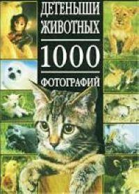 Детеныши животных 1000 фотографий