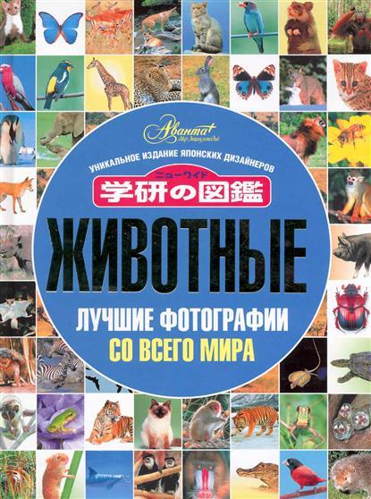 Животные Лучшие фотографии со всего мира