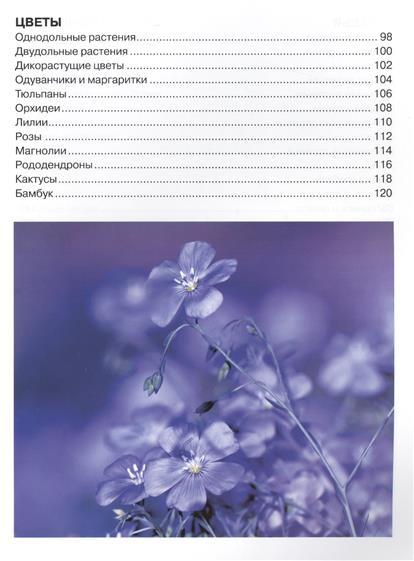 Большая энциклопедия растений для детей