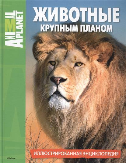 Животные крупным планом. Иллюстрированная энциклопедия