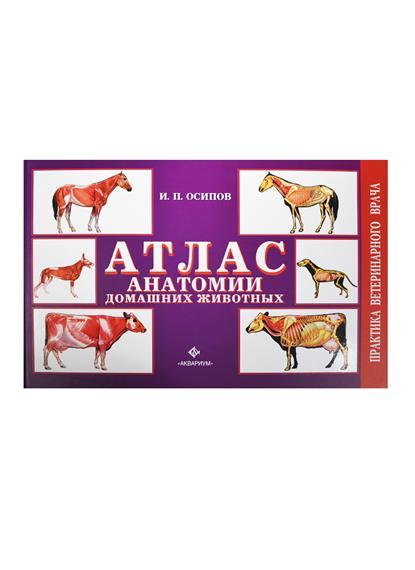 Атлас анатомии домашних животных