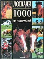 Лошади 1000 фотографий