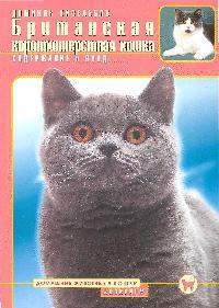 Британская короткошерстная кошка Содержание и уход