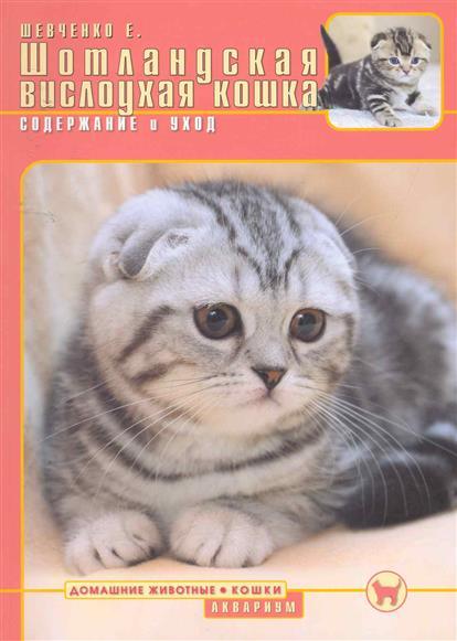 Шотландская вислоухая кошка Содержание и уход