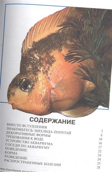 Цихлида-попугай