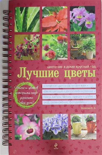 Лучшие цветы Цветение в доме круглый год