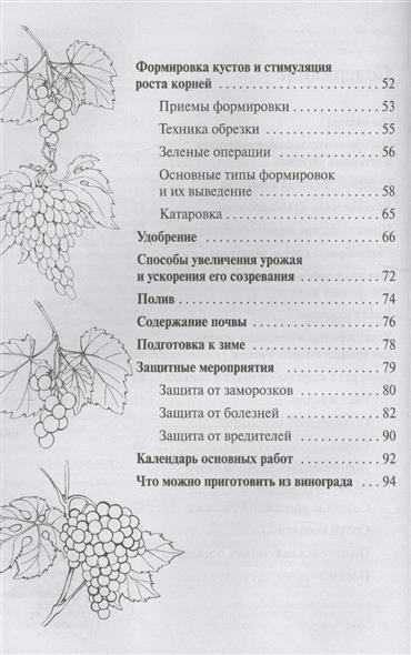 Виноград. Выращивание в средней полосе России