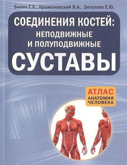 Соединение костей: неподвижные и полуподвижные суставы