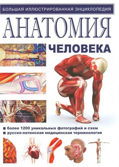 Иллюстрированная атлас. Анатомия