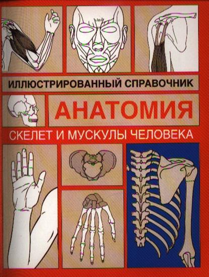 Скелет и мускулы человека Илл. справочник