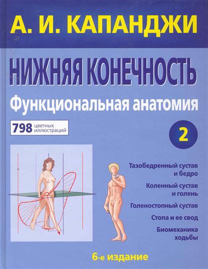 Нижняя конечность Функциональная анатомия