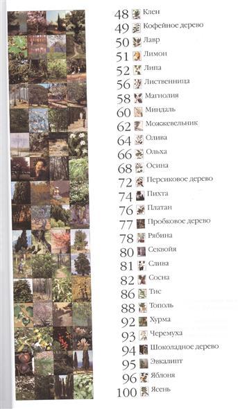 50. Самые известные деревья. Иллюстрированная энциклопедия